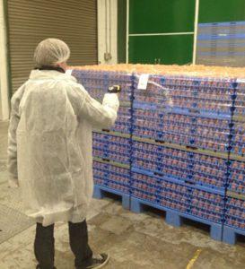Ontvangst gesorteerde en 2e soort eieren pakstation