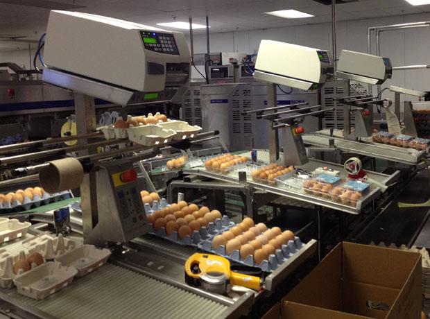 Ongesorteerde gesorteerde eieren