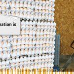 New website Ovotrack Destination Eggs