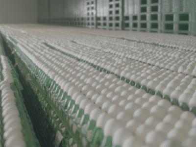 Stock Location - eggs